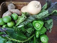 今週の野菜 - オーガニックカフェたまりばーる