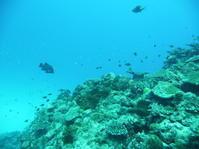 水面は荒れ気味でしたが・・・・~糸満近海ガイド付きボートダイビング(ファンダイビング)~ - 沖縄本島最南端・糸満の水中世界をご案内!「海の遊び処 なかゆくい」