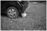クルマの下のネコ - BobのCamera