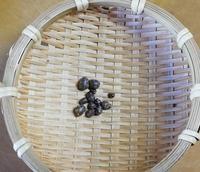 むかご収穫 - 好食好日
