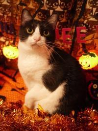 2019年10月22日ゆきねこハロウィンニャーティー開催&ゆきねこ雑貨店開店時間のお知らせ。 - ゆきねこ猫家族
