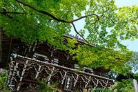 善峯寺の紫陽花 - ぴんぼけふぉとぶろぐ2