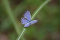 クロマダラソテツシジミ他10月16日 - 超蝶