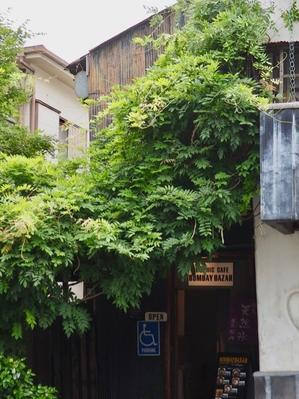 greenhouse collection⑳中目黒・代官山界隈 -