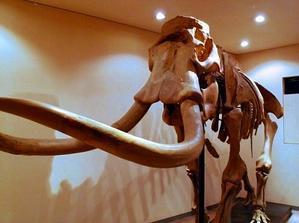 化石発掘メンバー木村氏がナウマンゾウ記念館訪問 - 本別ブログ(ふるさと・東京本別会)