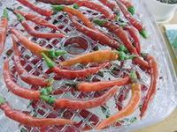 食材・・・・? - 野菜tukuri