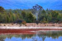 奥日光・小田代ヶ原の「幻の湖」・・・白樺の貴婦人の風情こそ絶景なり♪ - 『私のデジタル写真眼』