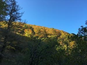 10月16日(水)朝の気温1℃。 - つるぎさん山小屋日記