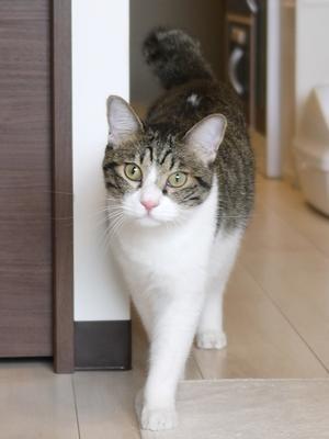 猫のお留守番 まさおくん編。 - ゆきねこ猫家族
