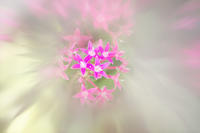 ペンタス - 光 塗人 の デジタル フォト グラフィック アート (DIGITAL PHOTOGRAPHIC ARTWORKS)