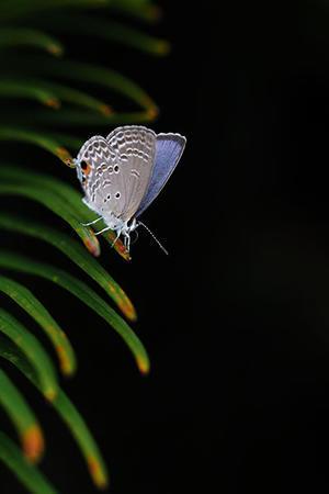 懐かしい蝶に再会です - スポック艦長のPhoto Diary
