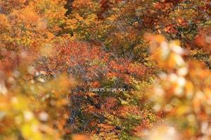 秋色 - FUNKY'S BLUE SKY