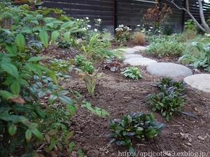 秋の庭しごと 宿根草と低木の植えつけ2 - シンプルで心地いい暮らし