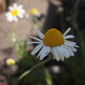 薬草術本日から始まります - sola og planta ハーバリストの作業小屋