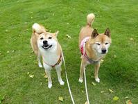 桜とカマキリ - abby & zack