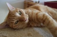 急に秋 - 猫がキルトで寝てる間に