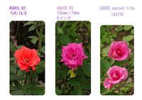 薔薇を撮りに行きました。資生堂大阪工場 - 写真で楽しんでます!