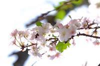 十月桜 - きずなの家創り