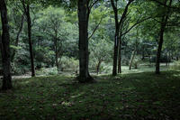 Forest of Muse - 気の向くままに…