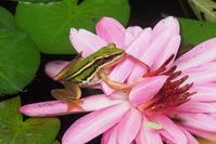 エントピアの蛙 - TOM'S Photo
