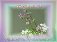 フォトTAO575『面白や空即是色言も花』zwp0505 - 老仁のハッピーライフ