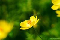 花たち・・・ - ショーオヤジのひとり言