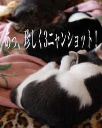 にゃんこ劇場「今日は仲良しだニャン」 - ゆきなそう  猫とガーデニングの日記