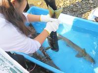 【第10回霞ヶ浦自然観察会「川に帰ってきたサケ」を実施します。】 - ぴゅあちゃんの部屋