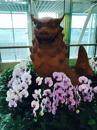 沖縄旅行&食べ物記録 - まいど!猫背BARでございます。