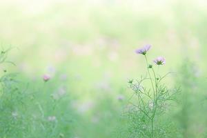 昭和記念公園 - happy *riko* PHOTO COLLECTION