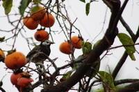 秋の鳥見物 - mofmof倶楽部