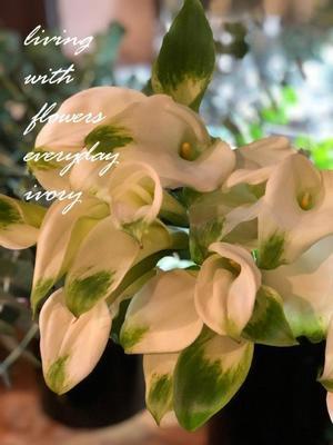 ?10月21日(月) お休み ?10月22日(火) 営業日 -  Flower and cafe 花空間 ivory (アイボリー)