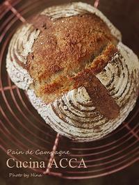 上達した?本日のパン・ド・カンパーニュ - Cucina ACCA