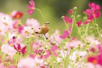 ノビタキ月間 - ゆるゆる野鳥観察日記