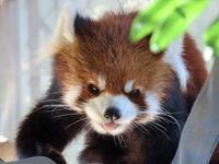 大牟田市動物園と福岡市動物園の旅行記を姉妹ブログ「レッサーパンダ紀行」にアップしました - (続)レッサーパンダ紀行