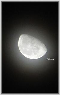 月と若鷹 - おだやかに たのしく Que Sera Sera