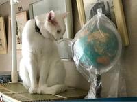 グローバルな視点で考え中のロッキーくん - Lucky★Dip666-Ⅳ