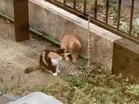 三子猫が朝からずっと庭で遊んでる - Lucky★Dip666-Ⅳ