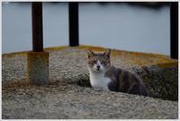 海辺と猫とオートバイ - OWLの飼育箱