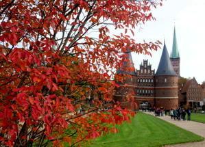 久しぶりの美味しい魚介スープ - 7つの塔が見える窓から in ドイツ