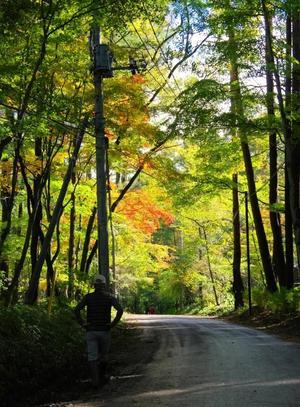 いよいよ森が色づき始めた - 暮らしてみれば in Kitakaruizawa