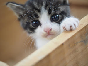 【日記】被災キャンプ場の子猫たち - SAMのLIFEキャンプブログ Doors , In & Out !