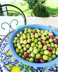 搾りたてオリーブオイルのご案内、開始しました! - 幸せなシチリアの食卓、時々にゃんこ