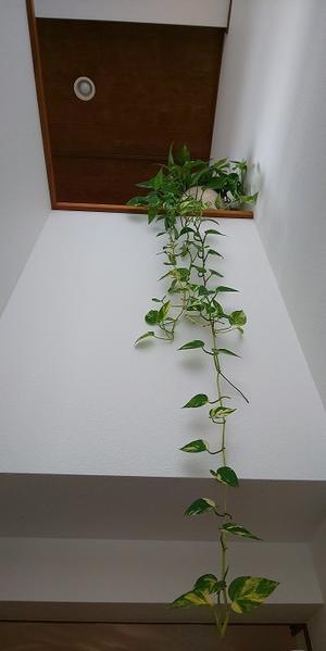 観葉植物 &  運動会 - 心とカラダが元気になるアロマ&ハーブガーデン教室chant rose