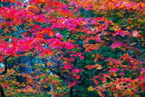 奥日光 龍頭滝の紅葉 - 写真とパピオン大好き3