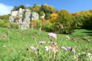 紅葉にキノコにょきにょき秋の森、ラヴェルナ - イタリア写真草子 Fotoblog da Perugia