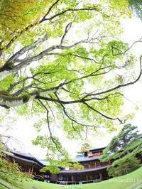 日光田母沢御用邸記念公園 秋の音楽祭~小督~ - 日々の贈り物(私の宇都宮生活)