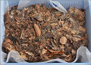 土着菌腐葉土の採取 - 蝴蝶の夢
