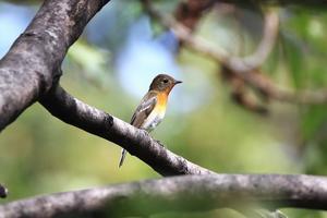超VIB(Very Important Bird)、ご来園(^^)/ - Granpa ToshiのEOS的写真生活