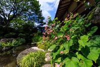 秋海棠と初秋の花々(実光院) - 花景色-K.W.C. PhotoBlog